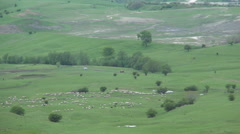 A flock of sheep moving to the farm on a mountain meadow. Mountain summer season Stock Footage