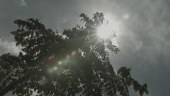 Africa leaves tree flare sun pan Stock Footage