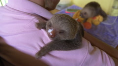 Baby sloth on woman's shoulder Stock Footage
