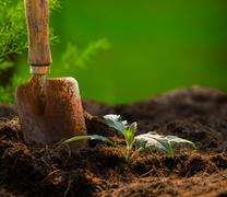 plant and gardening tool against beautiful blur background in green park use  - stock photo