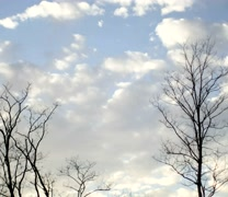 Sunlight Fading Behind Winter Trees (Higher Res than 1080) - stock footage