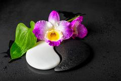 Yin-Yang symbol of stone texture with green leaf Calla lily and orchid flower - stock photo