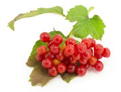 Rowan, rowanberry, rowan-tree, sorb, wild ash, viburnum, guelder rose Stock Photos