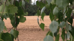 Tree leaves move and tractor fertilize sow field in summer Stock Footage