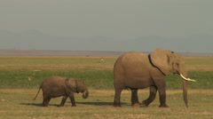 A mother elephant leads her baby away from the swamp. Stock Footage