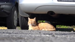 4k Cat relaxing under car in Encumeada region Madeira Stock Footage