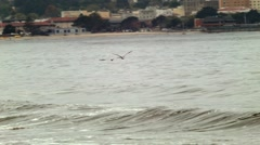 Pelican. footage was made in Monterey CA. birds catch fish in the ocean Stock Footage