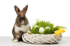 Brown bunny with wicker box and eggs Stock Photos