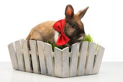 Brown bunny with bow tie is in white pot Stock Photos