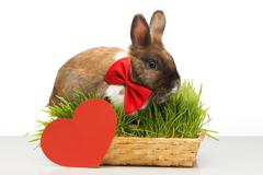 Little bunny is near red paper heart Stock Photos