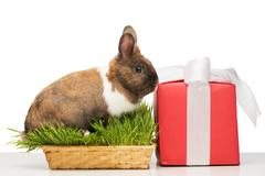 Brown bunny sitting in grass near red present box Stock Photos
