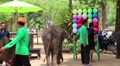 Show of elephants in Thailand Footage