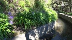 4k Beautiful flowers panning Levada Encumeada hiking path Stock Footage