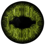 Strange eye of feline animal with colored iris. View into predator eye bulb Stock Illustration