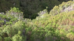 4k rough nature Rabacal mountain region Madeira tilt Stock Footage