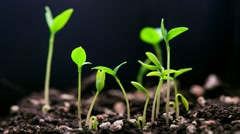 Germinating plants - stock footage