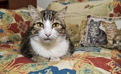Common cat - stock photo