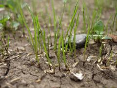 Beginning of grass growth Stock Photos