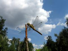 Dragonfly on stalk Stock Photos