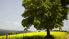 Tree in the Field Stock Footage