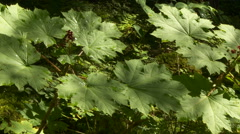 Leaves in the forest undergrowth - stock footage