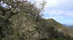 4k Braid tree panning Rabacal mountain region in Madeira Stock Footage