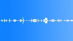 Animals_jackdaws_01 Sound Effect