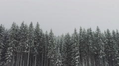 Strong snow comes on the background of Christmas trees Stock Footage