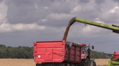 Harvester load wheat cereal into truck trailer Stock Footage