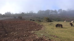 4k Sheep and clouds fog mountain Pico do Arieiro Madeira Stock Footage