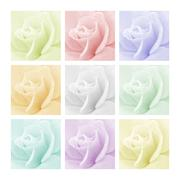 Tinted Roses - stock photo