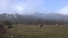 4k Sheep and clouds mountain Pico do Arieiro Madeira Stock Footage