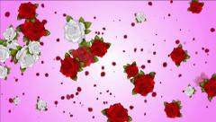 Falling red and white roses on a pink - white background Stock Footage