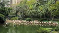Flamingo in a park in Hong Kong Stock Footage
