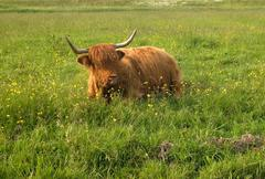 Farm Animal - stock photo