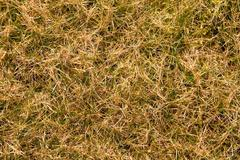 Decay harvested grass in big green smell mound in corner of garden.  Organic  Stock Photos