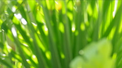 Green palm leaves. Stock Footage
