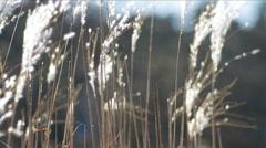 Sugarcane Spring field. - stock footage