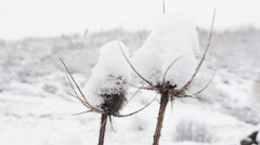 Thistles in winter Stock Footage