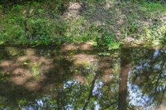 Transparent ditch with reflection of border and trees - stock photo