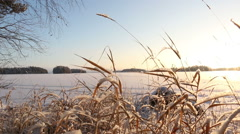 Frosty shore reeds on a cold and bright winter day Stock Footage