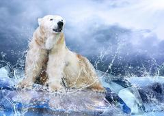 White Polar Bear Hunter on the Ice in water drops. Stock Photos