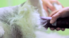 Stock Video Footage of Domestic Cat Grooming