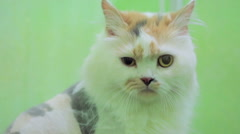 Cat With Sad Eyes Looking At Camera Stock Footage