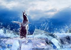 Penguin on the Ice in water drops. Stock Photos