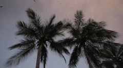 Leaves of the coconut trees waving in the wind, Dakar, Senegal Stock Footage