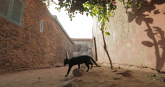 An alley in the Island of Goree, Senegal (4K) Stock Footage