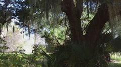Florida OakHill SeminalRest  Cape CanaveralSPark SpanishMoss 01svv - stock footage