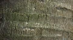 Palm tree bark texture, 4K Stock Footage
