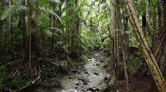 Creek running through Australian rainforest Stock Footage